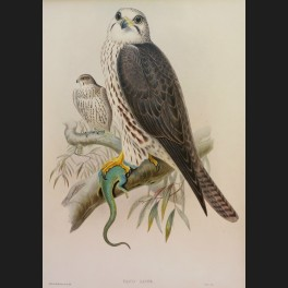 http://www.cerca-trova.fr/15142-thickbox_default/d-apres-edward-lear-spotted-eagle-lithographie-rehaussee.jpg