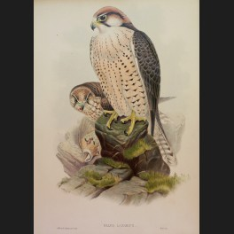 http://www.cerca-trova.fr/15146-thickbox_default/d-apres-edward-lear-spotted-eagle-lithographie-rehaussee.jpg
