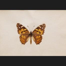 http://www.cerca-trova.fr/20221-thickbox_default/ecole-francaise-du-xixeme-siecle-papillon-aquarelle.jpg