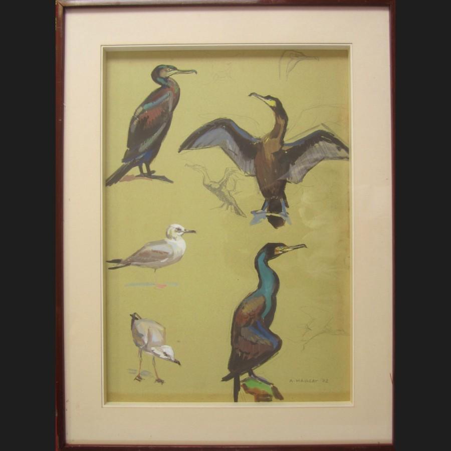 Andre margat etudes de mouettes et cormorans dessin - Dessins de mouettes ...