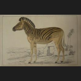 http://www.cerca-trova.fr/3903-thickbox_default/diverses-estampes-et-gravures-sur-le-theme-animalier.jpg