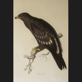 http://www.cerca-trova.fr/7409-thickbox_default/d-apres-edward-lear-spotted-eagle-lithographie-rehaussee.jpg